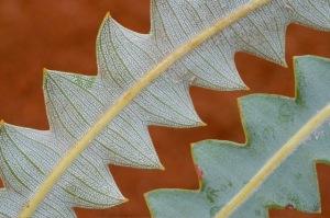 Indigenous plants - 0955 - Copy